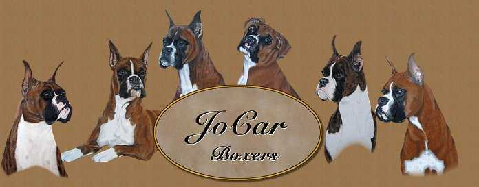 Welcome to JoCar Boxers