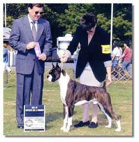 At the Lehigh Valley Kennel Club BJ was awarded WD/BOS under judge John J. Lyons