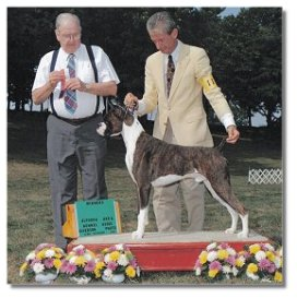 BJ awarded  WD/BOS under judge Robert J. Moore at the Altoona Area Kennel Club